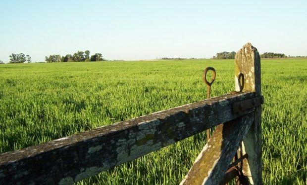 ¿Cómo están los precios de los campos?