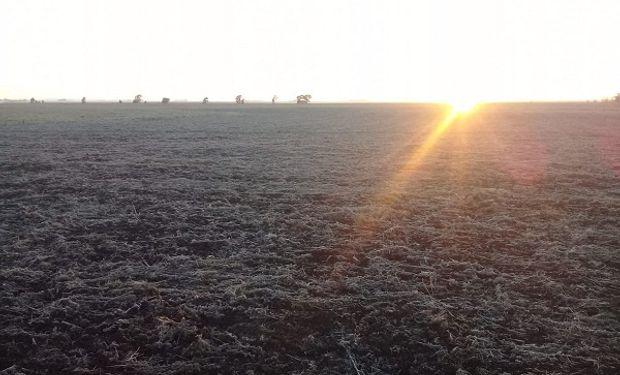 Las temperaturas bajas se instalan en la región y volverían las heladas