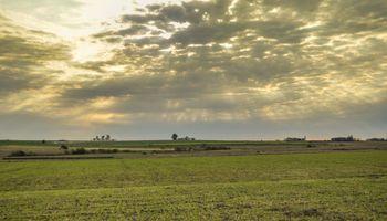 Economía, agronegocios y empleo: mejoran las expectativas de los empresarios del campo