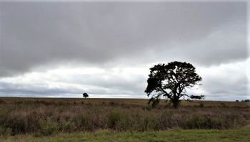Pronóstico del tiempo: alerta por tormentas fuertes en el Litoral