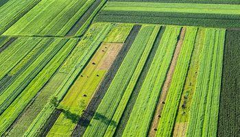 Agricultura: última contraofensiva para frenar a los ambientalistas