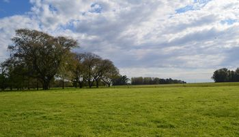 Por la reactivación del agro, sube el precio para alquilar un campo