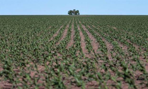 Polémica por un registro de la AFIP sobre tierras rurales productivas.
