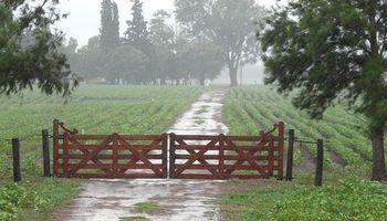 Lluvia en el campo: mejor tarde que nunca