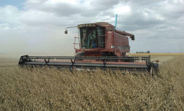 Rindes en provincia de Buenos Aires,  para la soja de primera es de 31 quintales por hectárea y para la segunda 21 quintales.