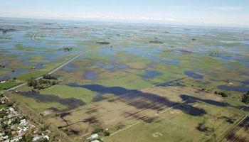 Cuenca del Salado: por las lluvias prevén daños en ganadería y maíz