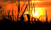 Según un informe, la tendencia en el precio de la soja, el trigo y el maíz pasó a estar estable