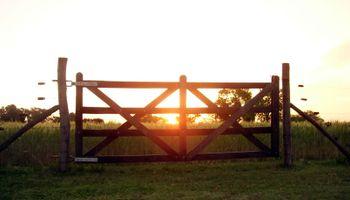 Venta de campos: volvió a caer la actividad del mercado inmobiliario rural