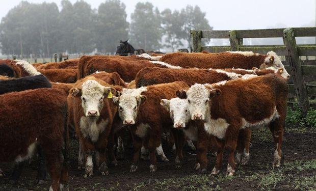 Granos, carne, leche y vino: qué tan competitivo es el campo argentino