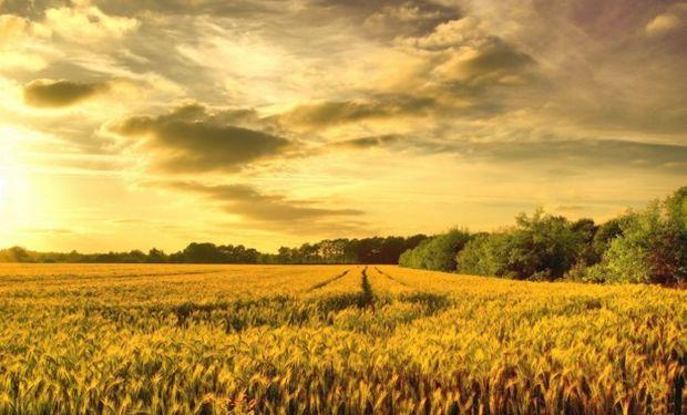 La dirigencia rural destaca que Macri ha venido siendo más claro que Scioli en sus propuestas para el agro.