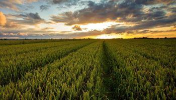 Crecen los negocios en el mercado inmobiliario rural por segundo mes