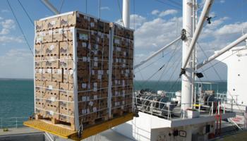 Abriendo mercados: mirá los nuevos destinos para los productos agroindustriales argentinos