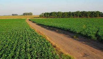 IRSA se expande en la región con la compra de un campo en Brasil