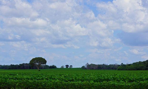 Informa recorta estimación de producción de soja y maíz