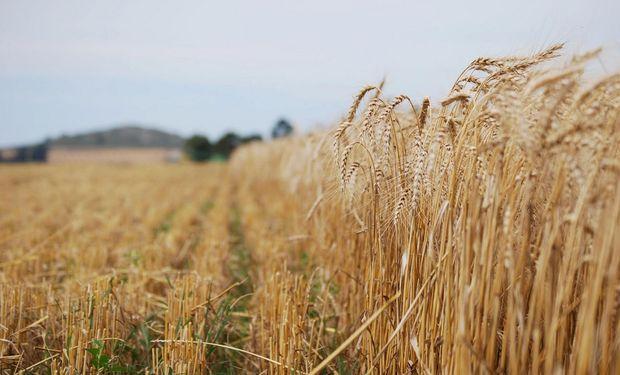 Hay soja para China y falta trigo para nosotros