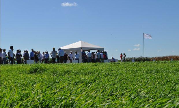 El lanzamiento de los productos se llevó a cabo en el Campo Experimental que tiene Rizobacter en las afueras de Pergamino.