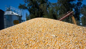 De cada US$ 10 que exportó Argentina en 2019 US$ 6,3 son del agro