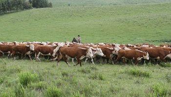 Mercado de campos refleja interés por la ganadería