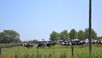 Contratos de arrendamientos ganaderos con cláusula de amortizaciones