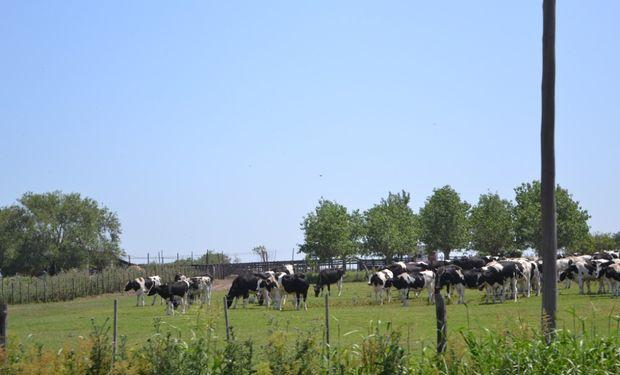 En la zona bonaerense de Arroyo de las Flores un campo ganadero típico se encuentra en torno a 60 kg/ha de novillo por año.