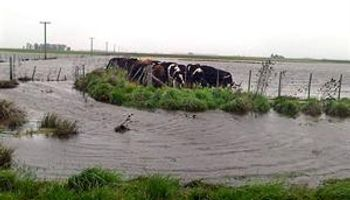 70% de los campos ganaderos de Ayacucho está bajo el agua