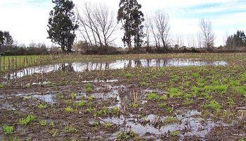 Consejos para el manejo de suelos ante la inundación