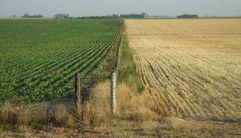 Muchos campos quedarán sin sembrar en Córdoba