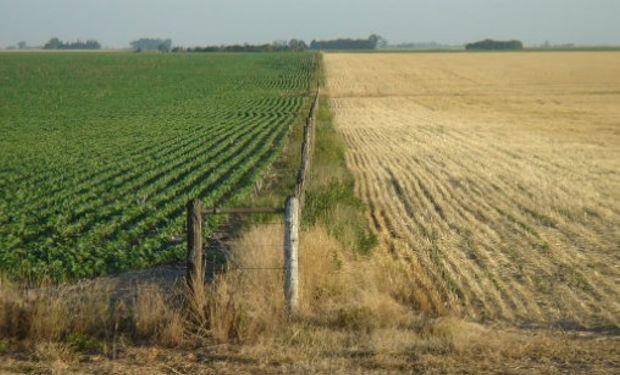 La reducción de la superficie sembrada con cereales obedece a una combinación de bajos precios a cosecha y aumento de los costos de producción.