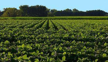 Agricultura de punta en campos marginales
