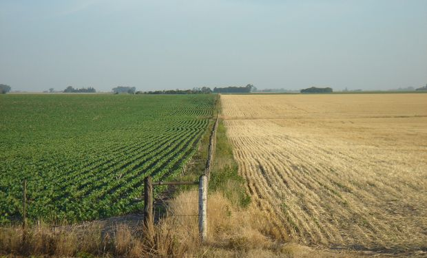 El agro ya no resiste el impacto de las retenciones