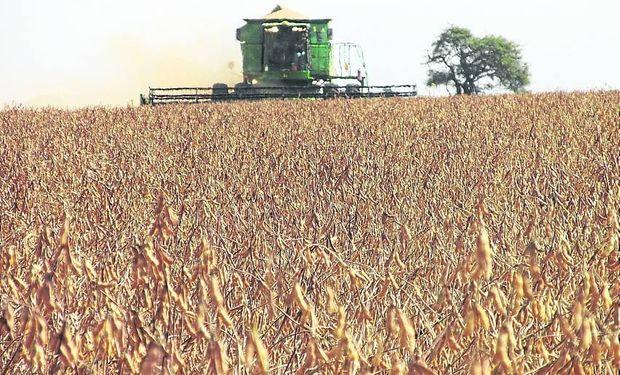 La soja ha sido el motor del crecimiento, pero las políticas públicas traban el deseo de los productores de diversificar cultivos.