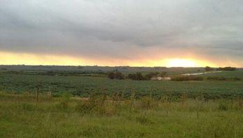 Crece el interés por invertir en campos uruguayos