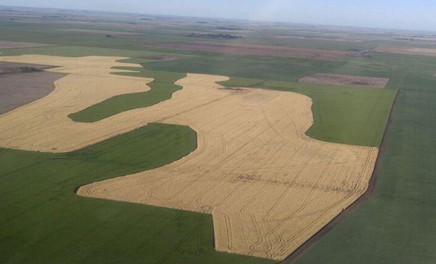 La agricultura por ambiente tiene un impacto positivo tanto en términos económicos como ambientales.