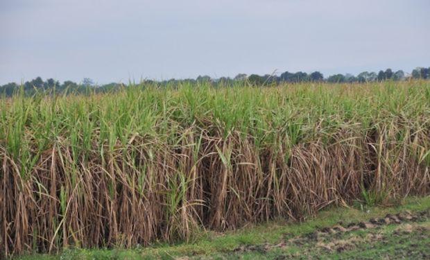 Según los resultados obtenidos, la caña –bajo un sistema con cosecha en verde– emite 0,73 % de gases debido al fertilizante nitrogenado aplicado.