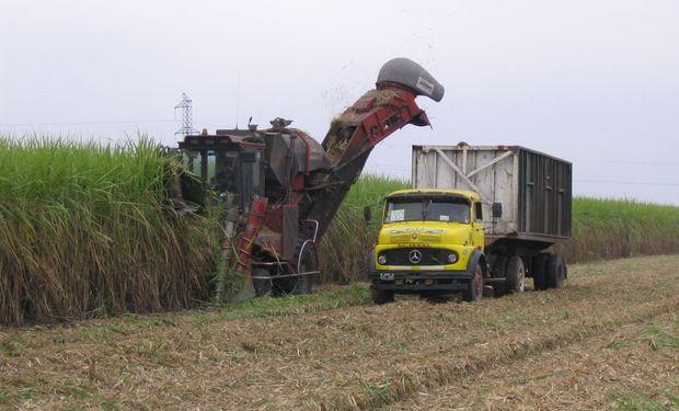 Sin prórroga de la Ley de Biocombustibles, cañeros alertan que se perderán 200 mil puestos de trabajo