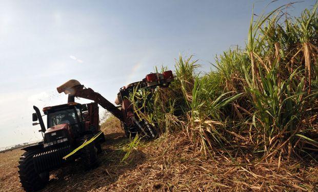 A partir de la melaza de la caña de azúcar, se obtiene casi la mitad del etanol argentino.