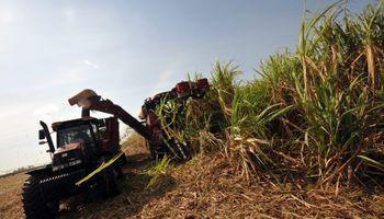 Por falta de rentabilidad, queda el 30% de la caña sin cosechar
