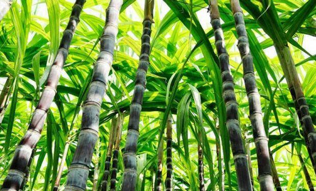 La industria azucarera apoya la Ley de Biocombustibles que se presentó en el Congreso