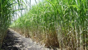 BASF apuesta a los cultivos regionales del NOA y Patagonia