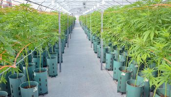 El Gobierno presenta un proyecto de ley para fomentar el desarrollo de la industria del cannabis medicinal