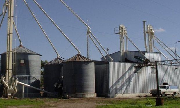 Hay un abarrotamiento de trigo de calidad regular en la provincia de Buenos Aires.