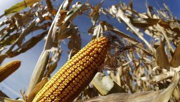 El maíz quedaría a salvo en la guerra comercial de Trump con México