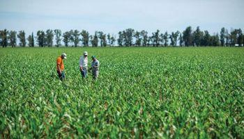 Factores claves de decisión en la siembra de maíz tardío