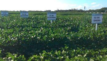 Una comitiva nacional consultó en China el estado de la soja HB4