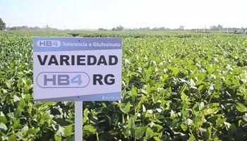 Cuál es el futuro de la soja tolerante a sequía