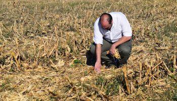 Tener el suelo cubierto mejora el sistema productivo