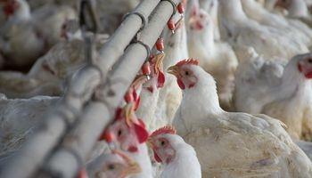 Trabajadores avícolas lograron un aumento salarial del 7 %