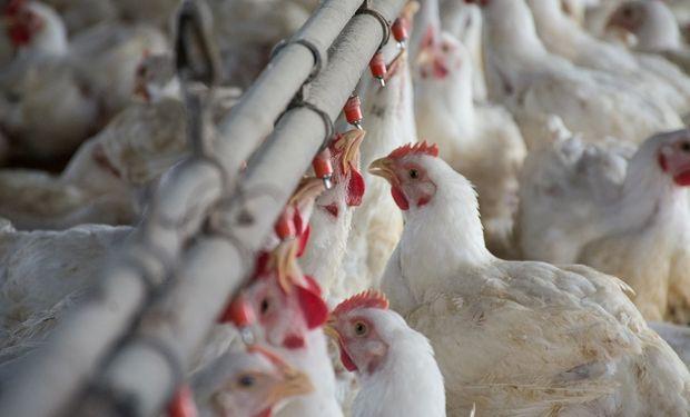 La producción aviar registró su punto más bajo desde 2018