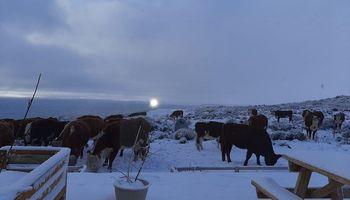 """""""Le encontramos la vuelta"""": cómo es producir carne en el fin del mundo"""