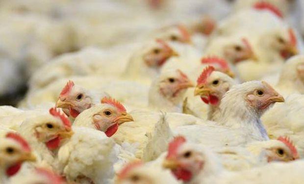 Cayó la producción, exportación y consumo aviar en enero y febrero.